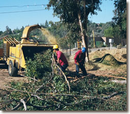 San Diego Tree Service chipping