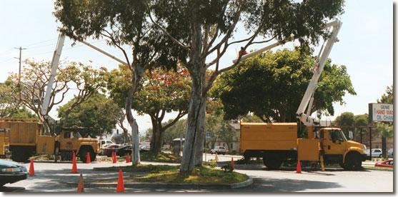 Homestead Tree Service cherry pickers